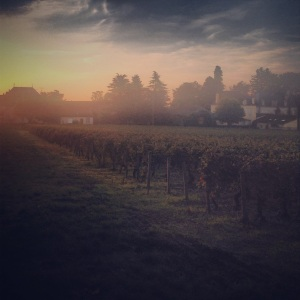 The sun rising over the vineyards in Aloxe-Corton